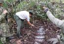 Militares destruyen contenedores cargados de pentolita en Tumaco